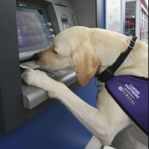 Assistance dog using ATM
